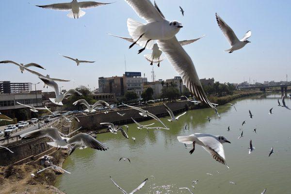 Khuzestan2-Mohsen Golanbari-PS