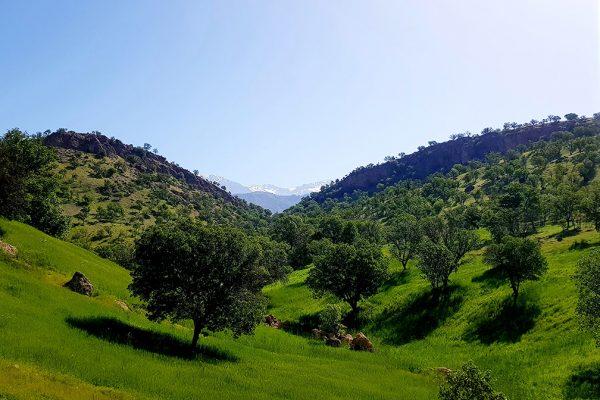 Kurdistan3-Marjan Afsharpour