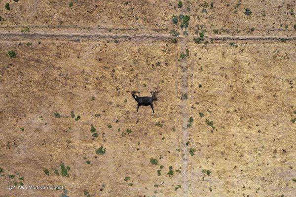 khuzestan-water-crisis-4