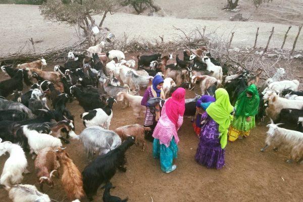 nomadic girls and livestock