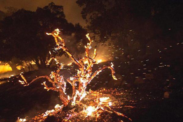 zagros-wildfire-syi-10